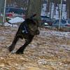 Bradley (new puppy)_002