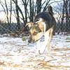 Buddy (puppy new)_002