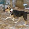 Buddy (puppy new)_001