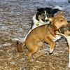 Buddy (puppy), Stack (puppy), Oreo_001