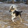 Buddy (puppy new)_003