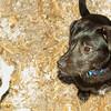 Bradley (new puppy), Delilah_001