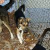 Buddy (puppy new)_004