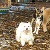 buddy (pupp), cody (wheaton), Penny_001