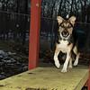 Buddy (new puppy)_005