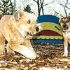 Buddy (new puppy), Cody wheaton pup)_001