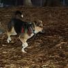 Buddy (new puppy boy)_001