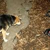 Bela (new puppy)_001