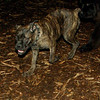Bela (new puppy)_005