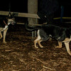 Bo (10yr), Kane (puppy)_001