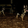 Bo (10yr), Kane (puppy)_002