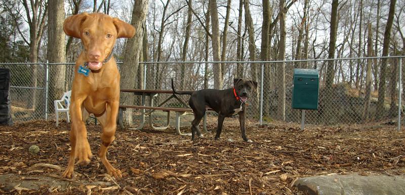 Cleo, Cody (new boy)_001