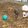 Cody (new boy), Cleo, Jack, penny_001