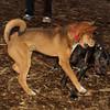 Bradley (puppy), Stack (puppy)_006