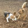 Bear (new), Snoopy (beagle)_001