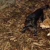 Bradley (puppy), Stack (puppy)_003