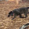 AA new dog_001