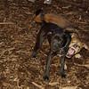 Bradley (puppy), Stack (puppy)_005