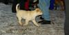 Apollo (foster puppy)_01