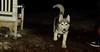 Koda (new puppy, shy)_09
