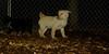 Apollo (foster puppy)_04