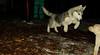 Koda (new puppy, shy)_08