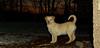 Apollo (foster puppy)_03