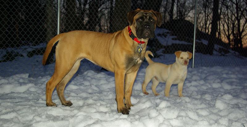 Apollo (puppy), Brandy (puppy)_01