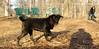Benny (pup)_02