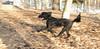 Ash (portuguese pup boy)_04