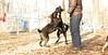 Ash (pup), Benny (pup)_04