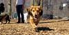 Bella (new rescue)05