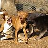 Doug, Buddy (puppy), Finley01