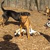 doug, sezy, buddy (puppy), sprocket01
