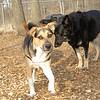 Buddy (pup)01