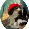 Charlie (shy spaniel) hat_10
