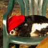Charlie (shy spaniel) hat_05