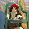 Charlie (shy spaniel) hat_06