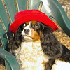 Charlie (shy spaniel) hat_13