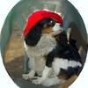 Charlie (shy spaniel) hat_03