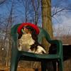 Charlie (shy spaniel) hat_12