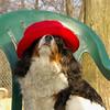 Charlie (shy spaniel) hat_04