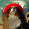 Charlie (shy spaniel) hat_14
