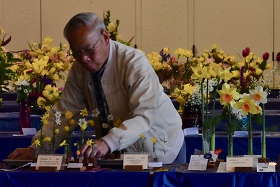 Kirby W. Fong won numerous awards for his myriad displays of daffodils, here carefully placing a set of winning flowers after photographing them. José Quezada — For the Times-Standard