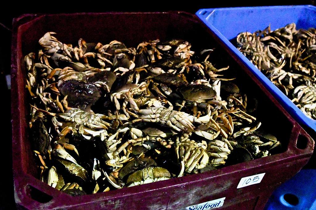 . Mmmmmmmm, crab!  José Quezada�For Times-Standard