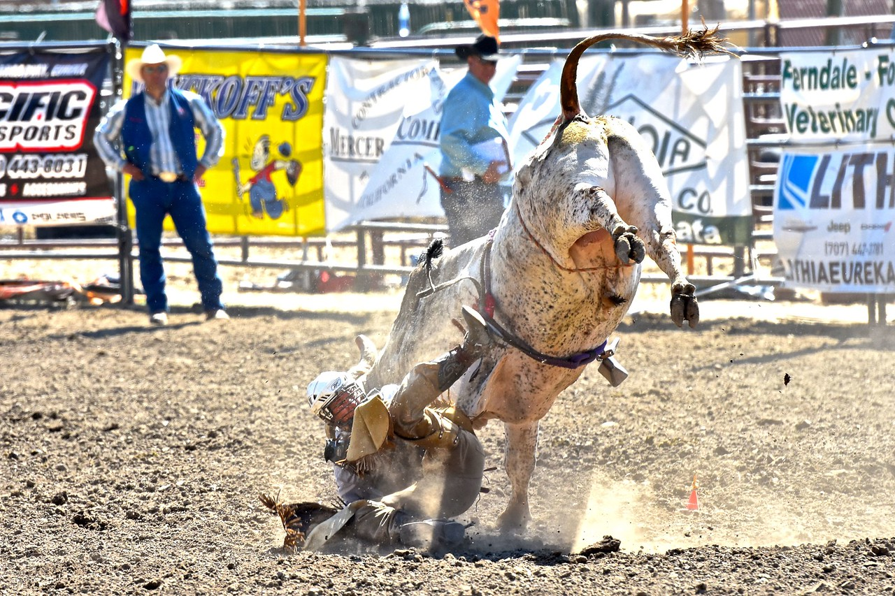 Wacey Vann meets a bull up, close, and personal. José Quezada—For the Times-Standard