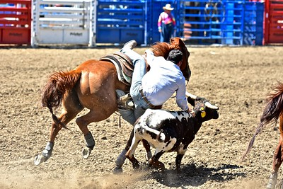 Robert Reneau of Bakersfield has one boot in the stirrup and one on the saddle for this steer wrestling try. José Quezada—For the Times-Standard