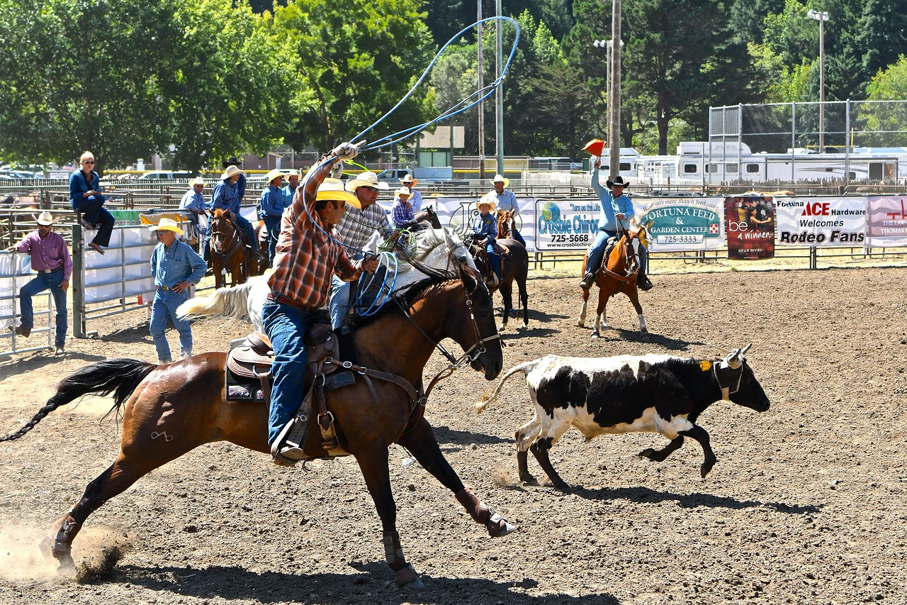 The Harrison and Bravos team take their lick competing in the Team Roping event. José Quezada—For the Times-Standard