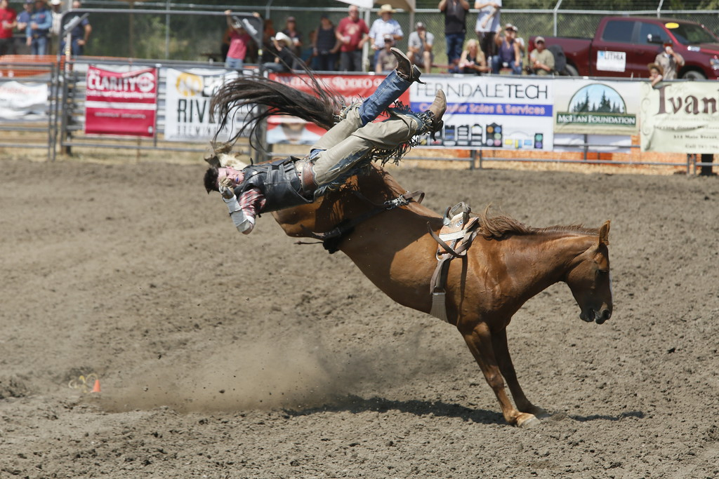 . Shaun Walker � The Times-Standard  Mitchel Parham of Clovis takes a fall in the bareback competition the Fortuna Rodeo on Saturday afternoon. The rodeo continues today with a barbecue at 11 a.m., a carnival opening at noon, and rodeo action at 1:30 p.m., all in Rohner Park.