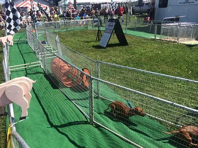 PHOTOS: Hot Dog Pig Races